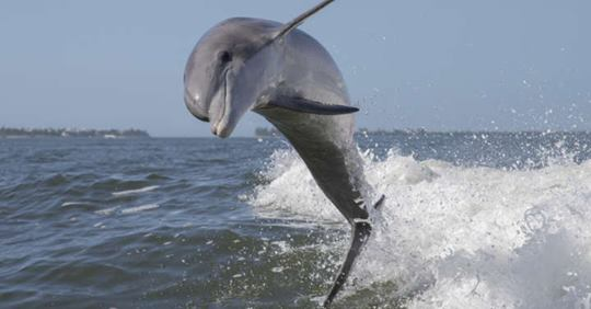 Chemicals from Cosmetics, Plastics, and Paints Found in Wild Dolphins